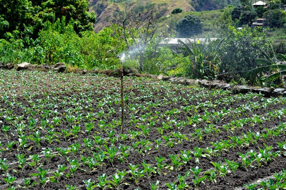 Benguet Farms