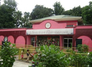 Marikina Word of Butterflies