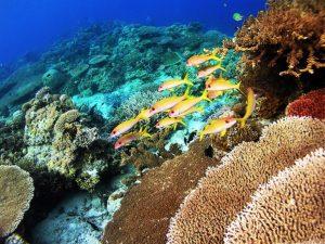 Apo Marine Negros