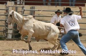 Philippines Masbate Rodeo - Masbate Cow